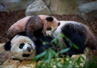 Etude des retombées économiques du Zoo de Beauval